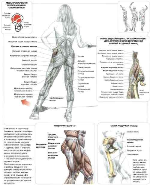 Тренировка мышц спины в домашних условиях для женщин - БТЛ-страна